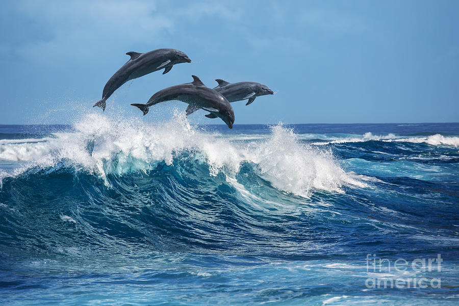Beauty Photograph - Three Beautiful Dolphins Jumping Over by Willyam Bradberry