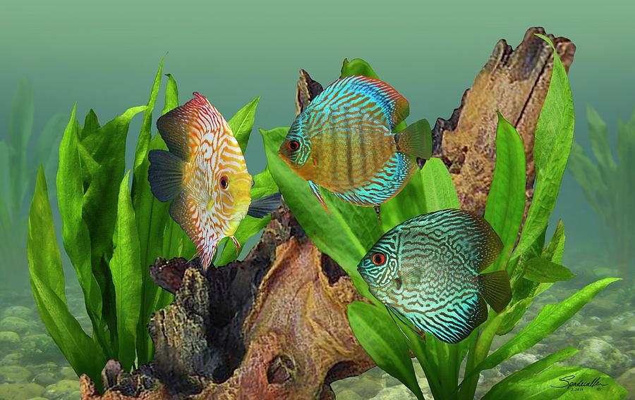 Fish Digital Art - Three Discus Fish by M Spadecaller