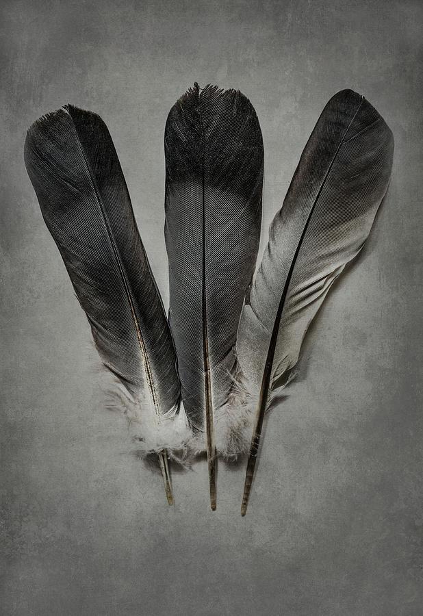 Three feathers by Jaroslaw Blaminsky