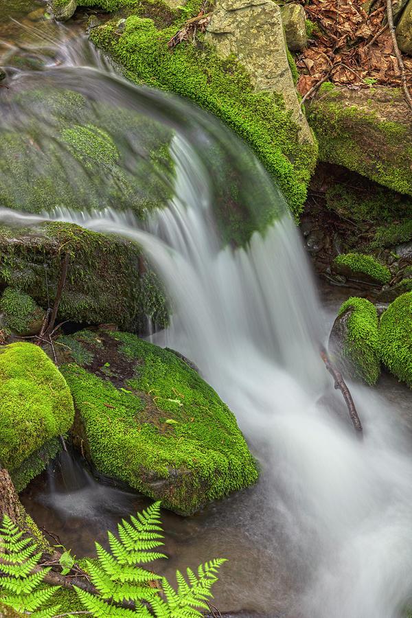 Three Ferns Cascade by Angelo Marcialis