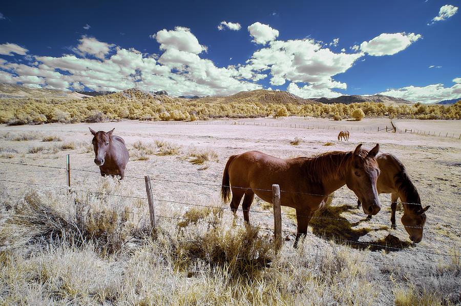 Three Horses in Colorado by Jon Glaser