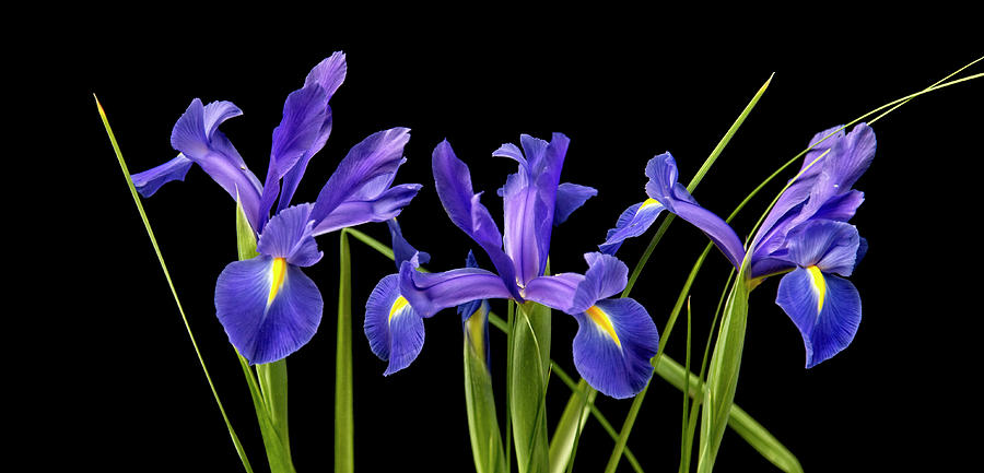 three ladies blue by Wayne Sherriff