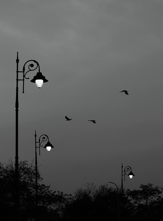 Three Lamps Three Birds by Prakash Ghai