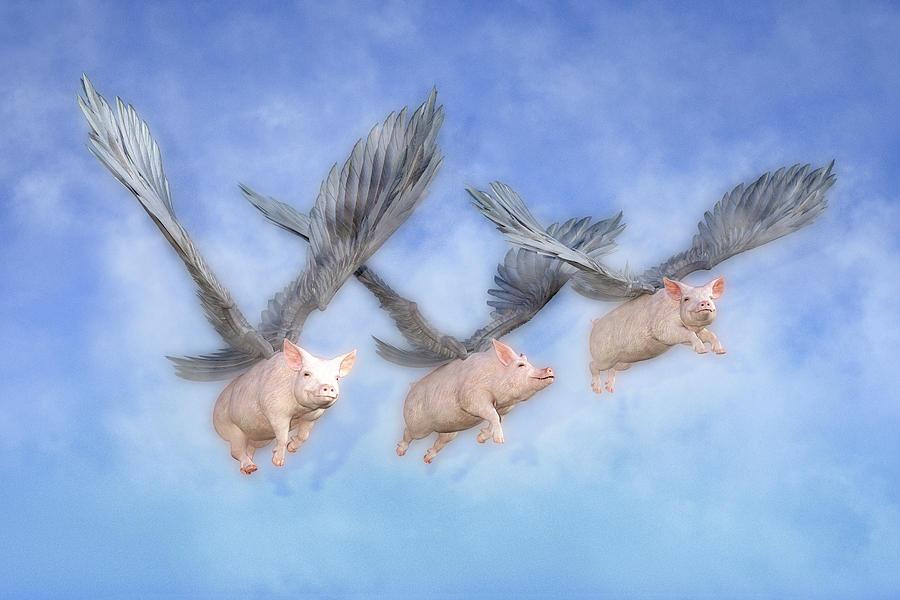 Pig Digital Art - Three Little Pigs  by Betsy Knapp