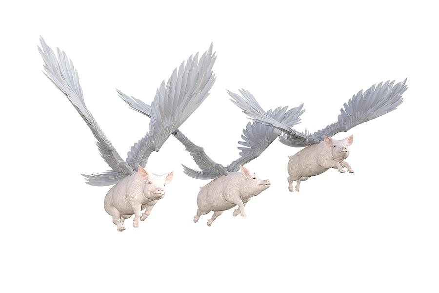 Pig Digital Art - Three Little Pigs Transparent by Betsy Knapp