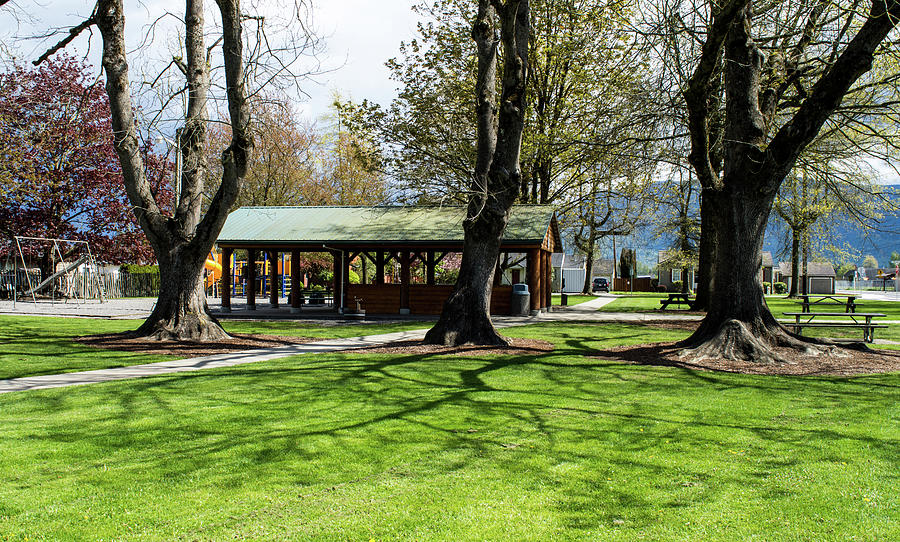 Three Maples in Everson Park by Tom Cochran