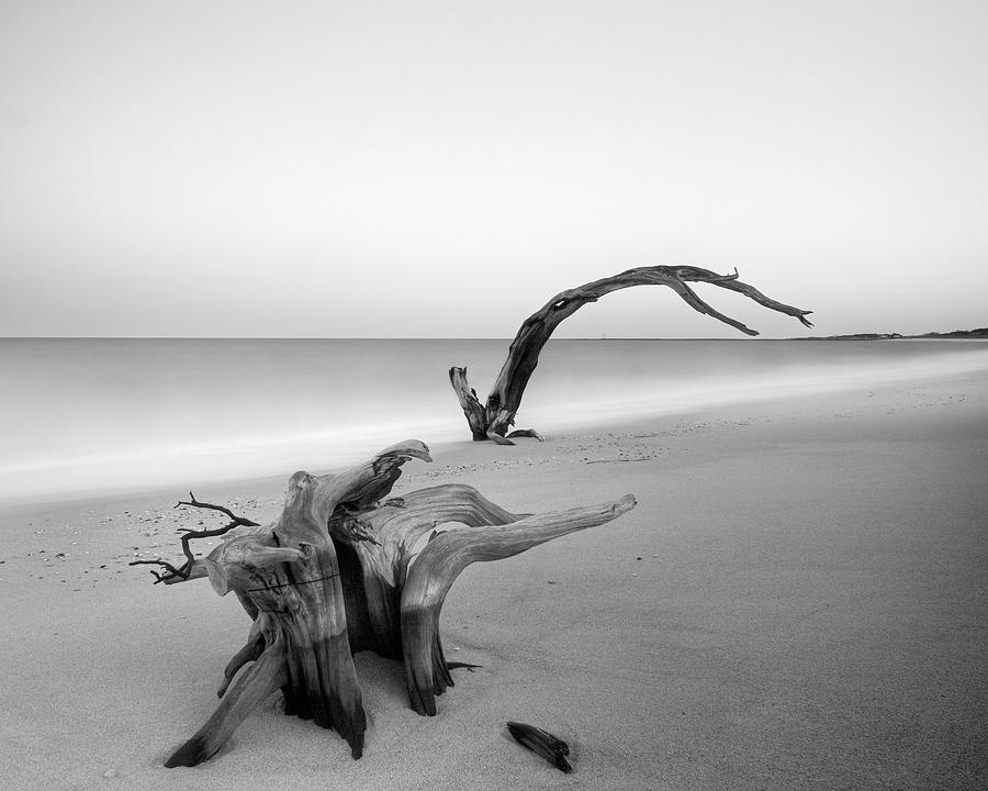 Driftwood Photograph - Three Masses by Geoffrey Ansel Agrons