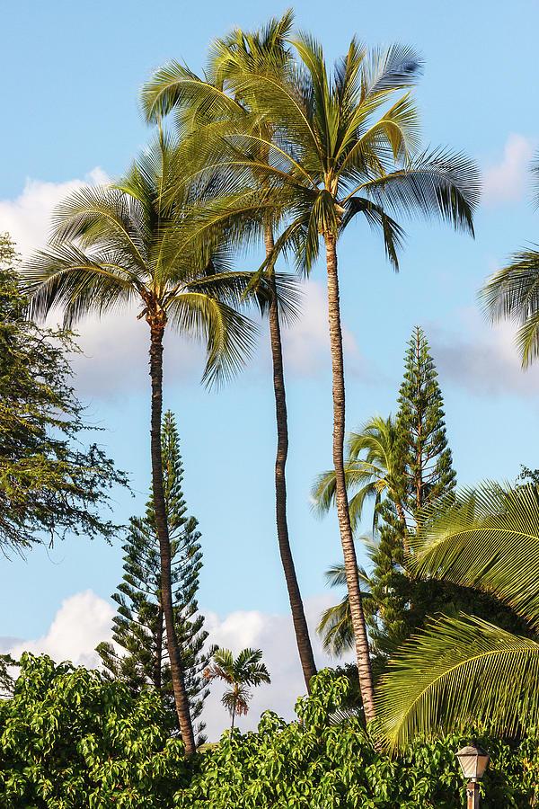 Three Palms by Ann Skelton