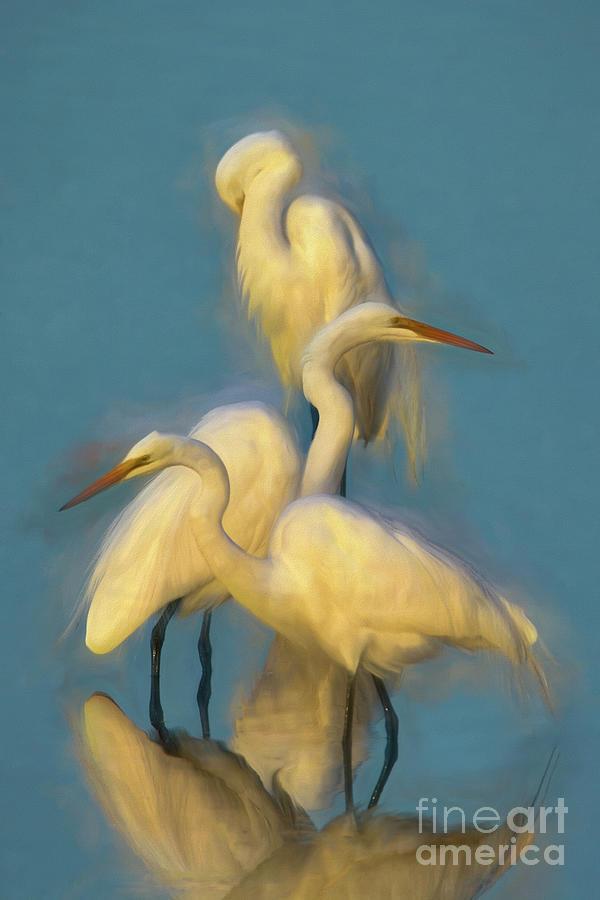 Three White Egrets by Kathy Baccari