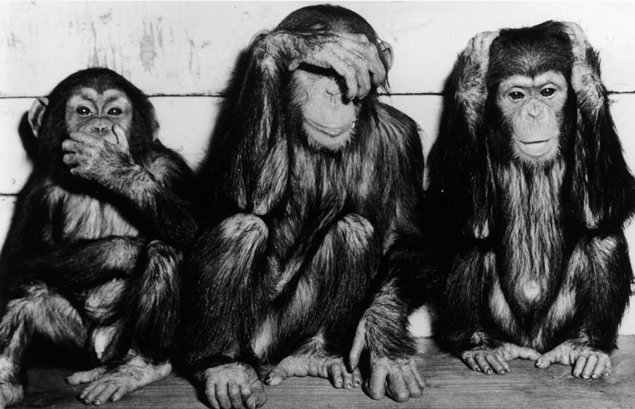 Three Wise Monkeys Photograph by Keystone