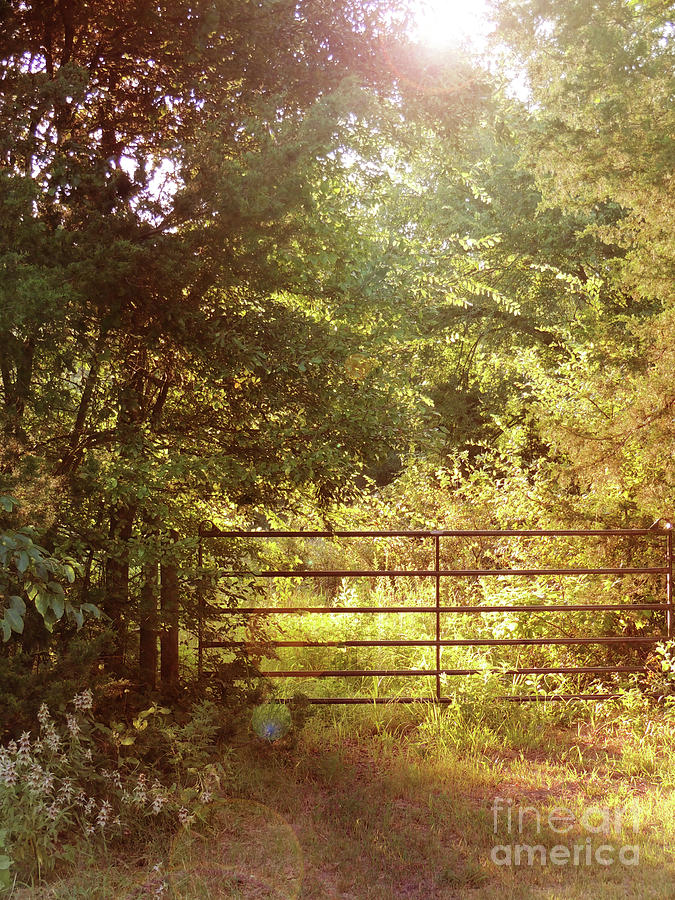 Through a Country Gate by Jayne Wilson