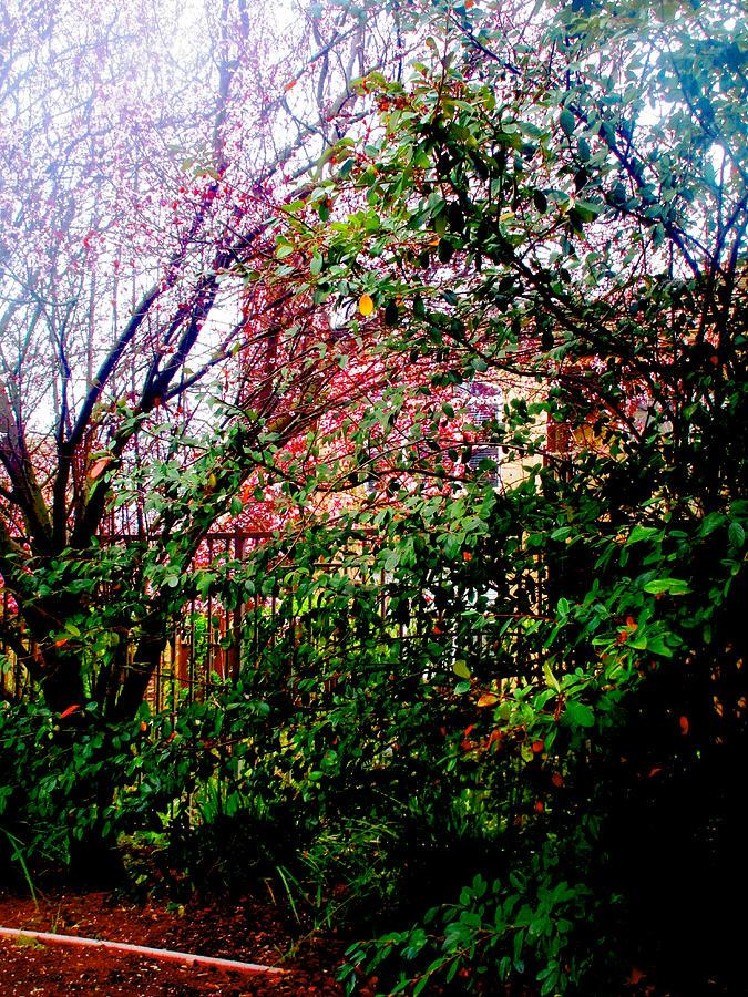 Through a Tree Darkly 2019 002 by Michael Genevro