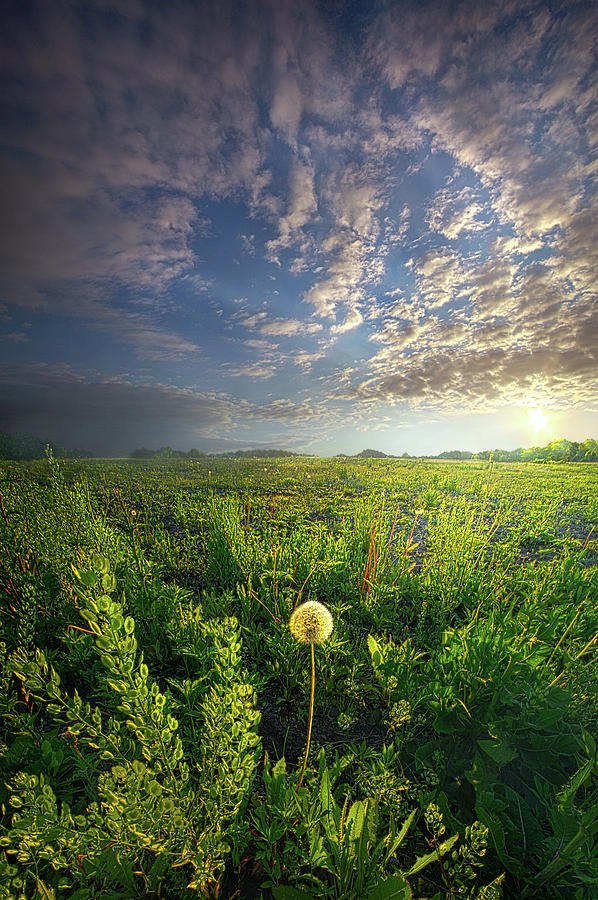 Life Photograph - Through Strength Of Faith by Phil Koch