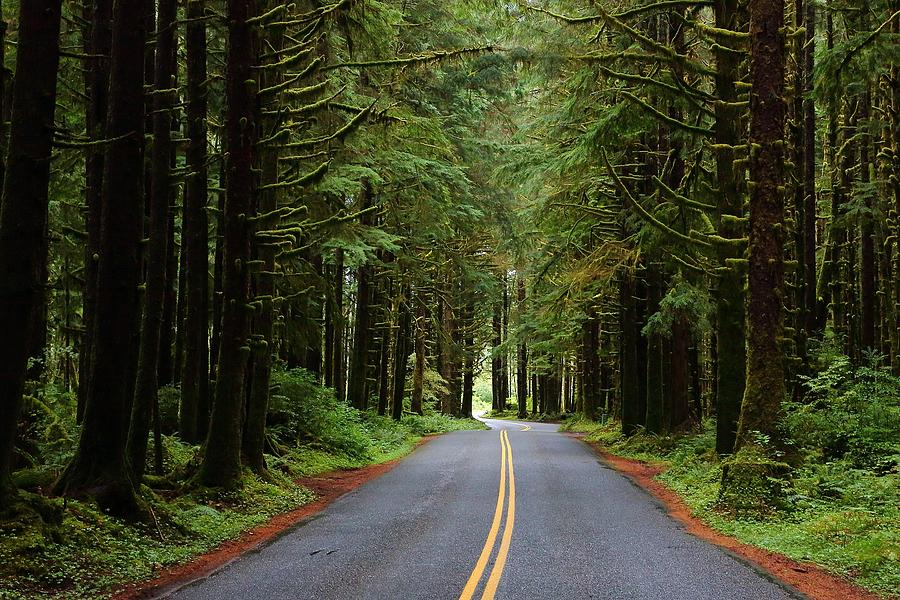 Through the Rainforest by David Andersen