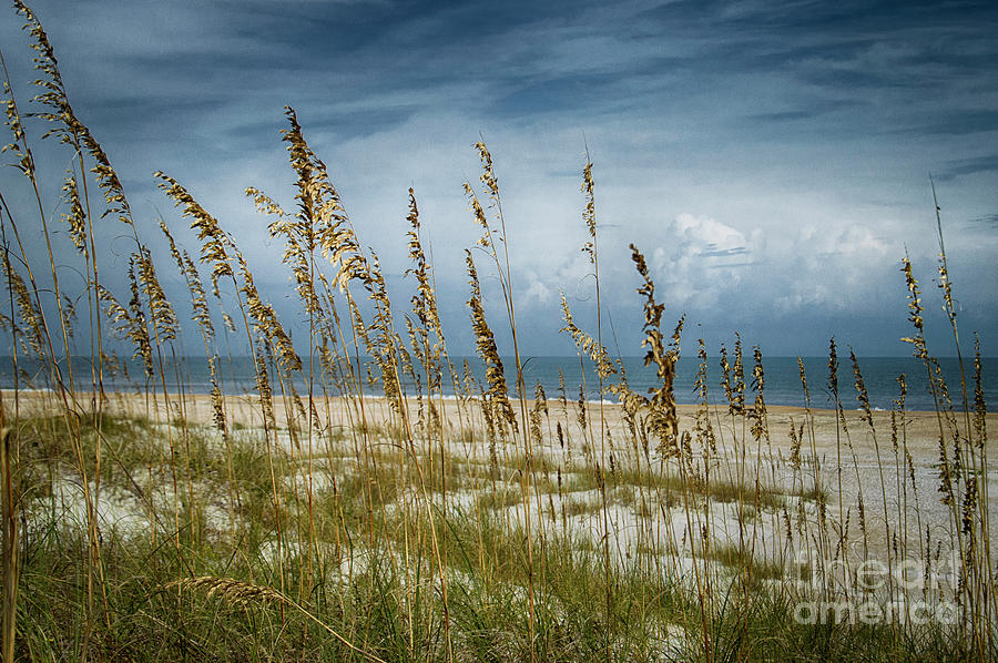 Through the Sea Oats by Judy Hall-Folde