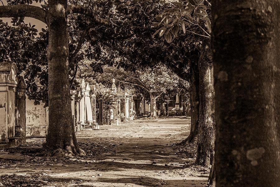 Through the trees by Jason Hughes