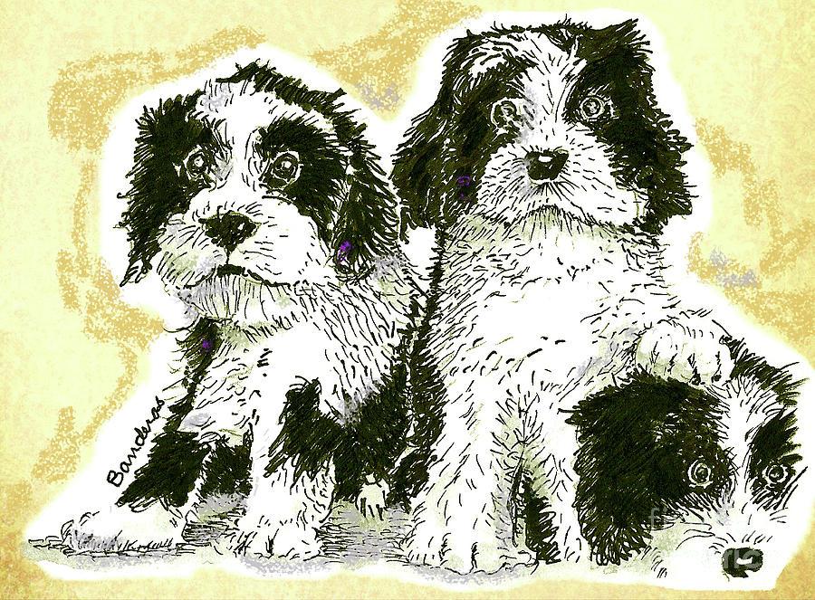 Tibetan Terriers by Terry Banderas