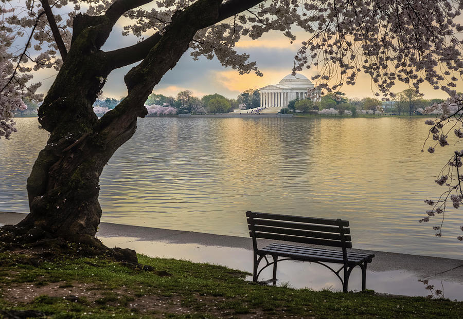 Tidal Basin Photograph - Tidal Basin With Cherry Blossoms And by Drnadig
