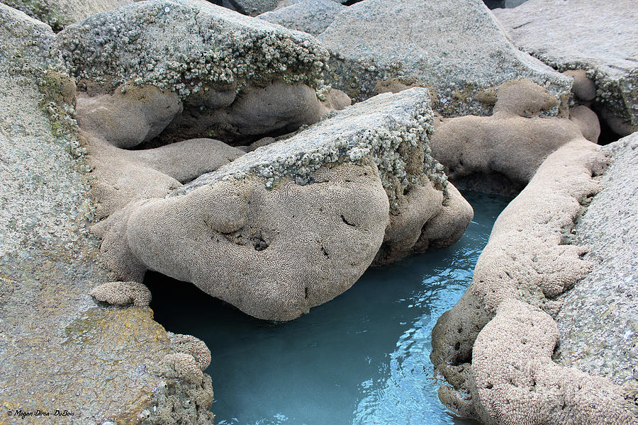 Tidal Pool 1 by Megan Dirsa-DuBois