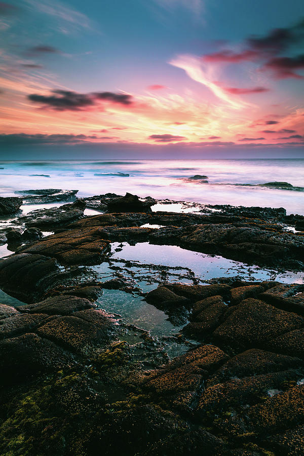 Tide Pools of La Jolla by Jason Roberts