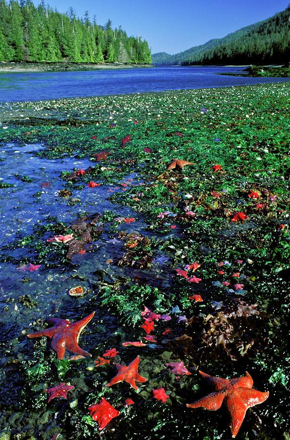 Tideppol Life, Burnaby Narrows, Gwaai Photograph by Jerry Kobalenko