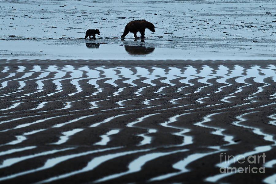 Tide's Out - Lake Clark-AK  by Sandra Bronstein