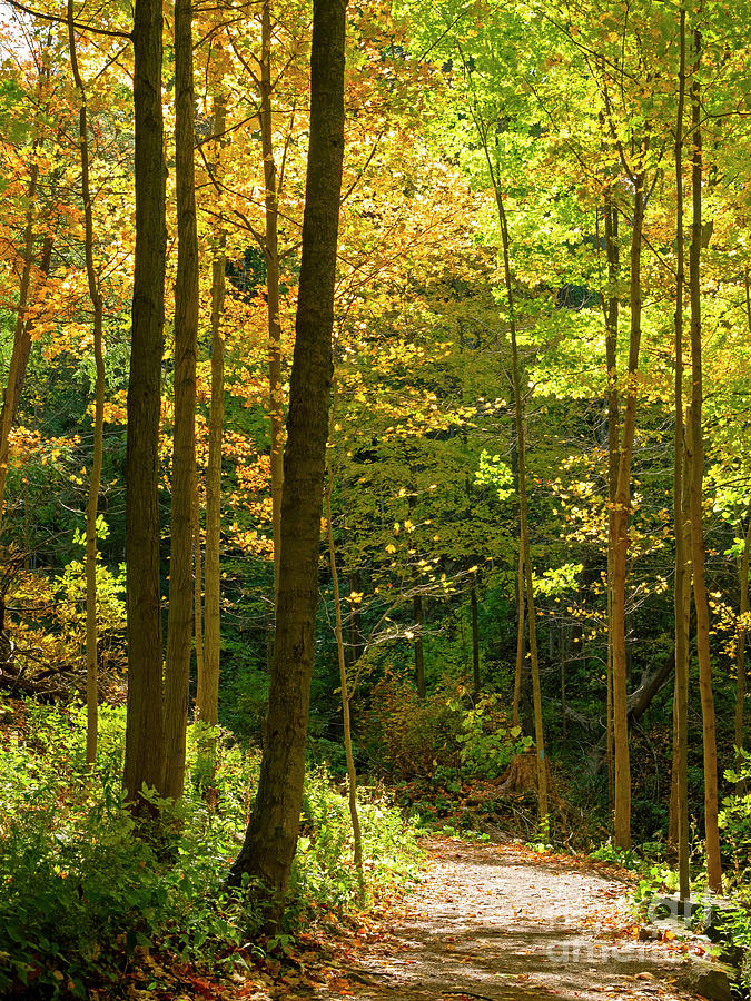 Tiffany Creek Footpath in Ancaster Ontario by Louise Heusinkveld