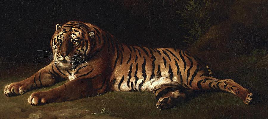 George Stubbs Painting - Tiger, 1769 - 1771 by George Stubbs