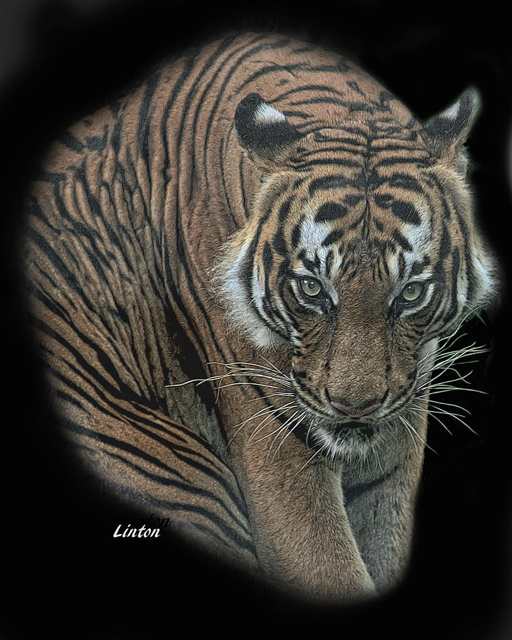 TIGER 6 by Larry Linton