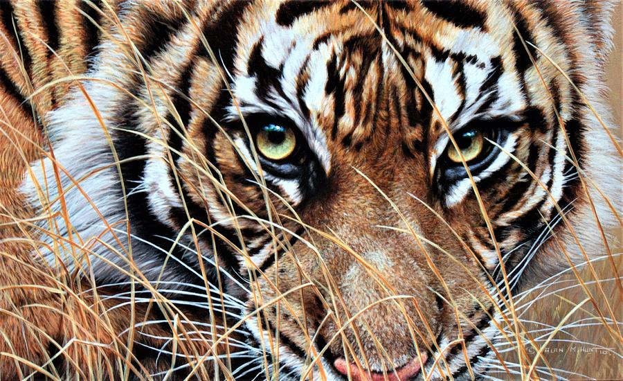 Tiger Eyes by Alan M Hunt by Alan M Hunt