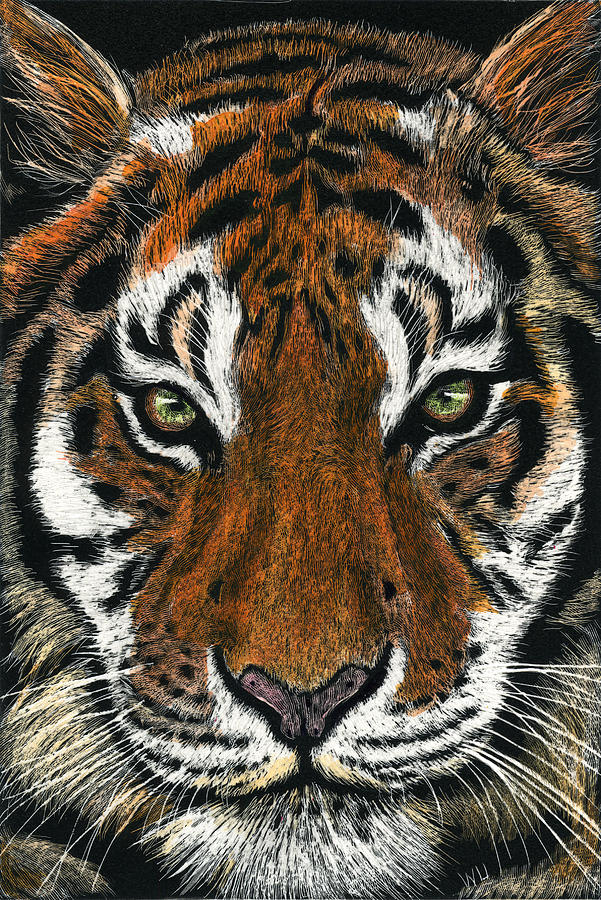 Tiger Face by William Underwood