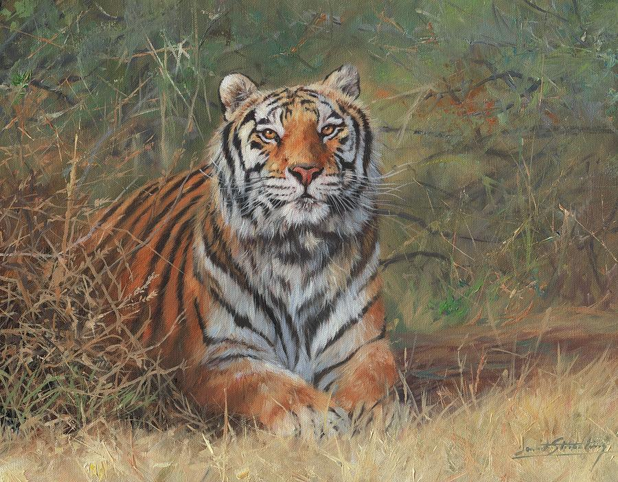 Tiger In Bush by David Stribbling