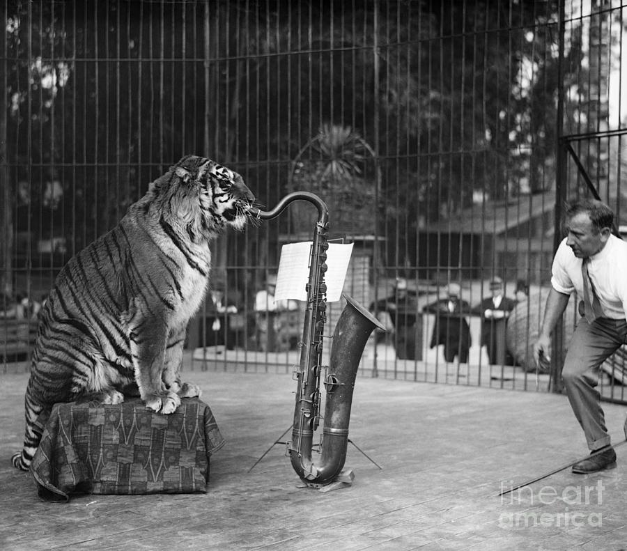 Tiger In Cage Playing Saxophone Photograph by Bettmann