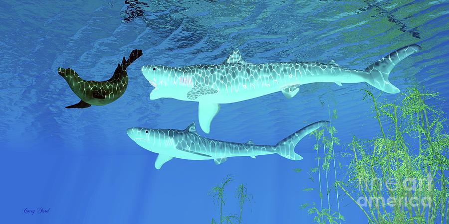 Tiger Shark attacks Seal by Corey Ford