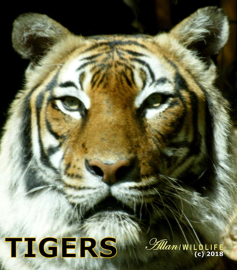 Tigers Photograph - Tigers Mascot 4 by Larry Allan