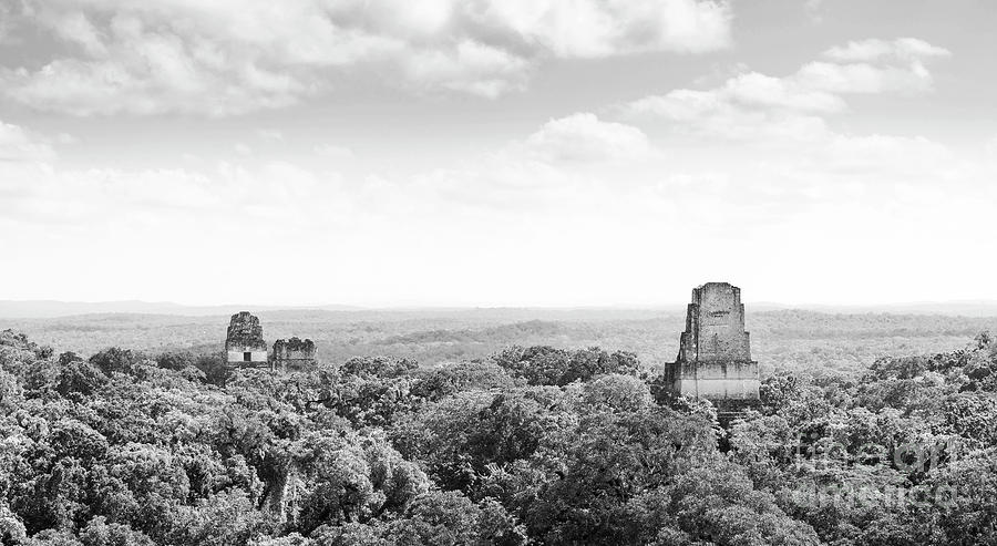 Tikal Guatemala Mayan Ruins Black and White by Tim Hester