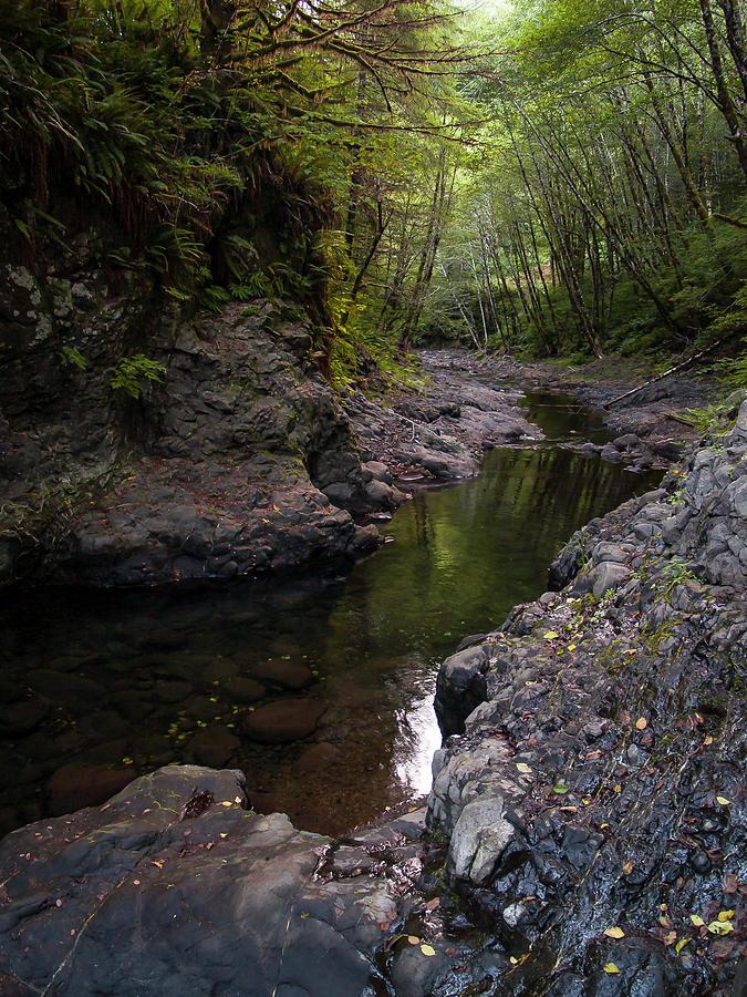 Tillamook Forest Stream by Steven Clark