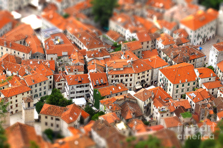 Small Photograph - Tilt-shift Miniature Effect Of Bird Eye by Katatonia82