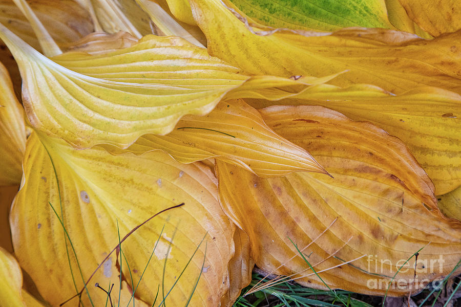 Abstracts Photograph - Time to Rest by Marilyn Cornwell