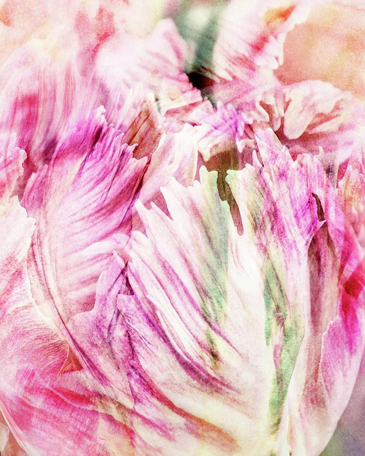 Timeless Tulip by Kathi Mirto