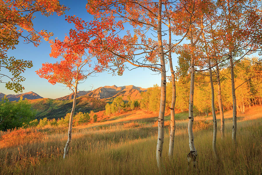 Timp with Fiery Aspens by Johnny Adolphson