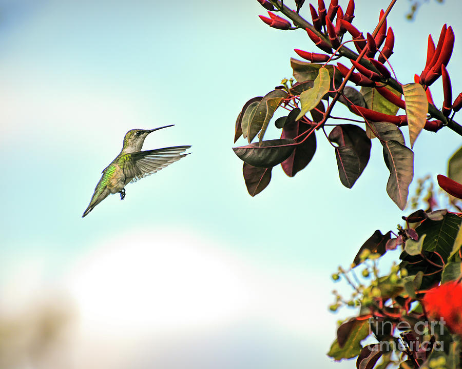 Tiny Feet and Wonderful Wings - A Hummingbird  by Kerri Farley