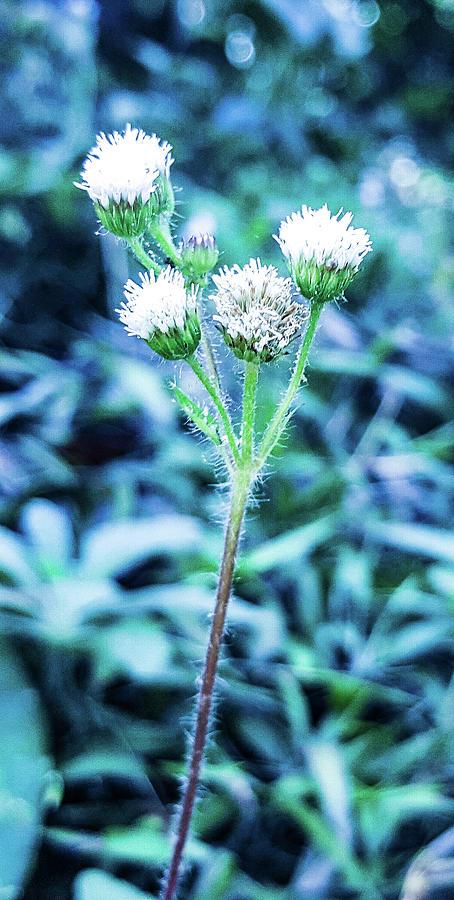 Tiny Flowers Photograph