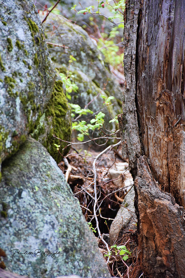 Tiny, Hidden Leaves Photograph