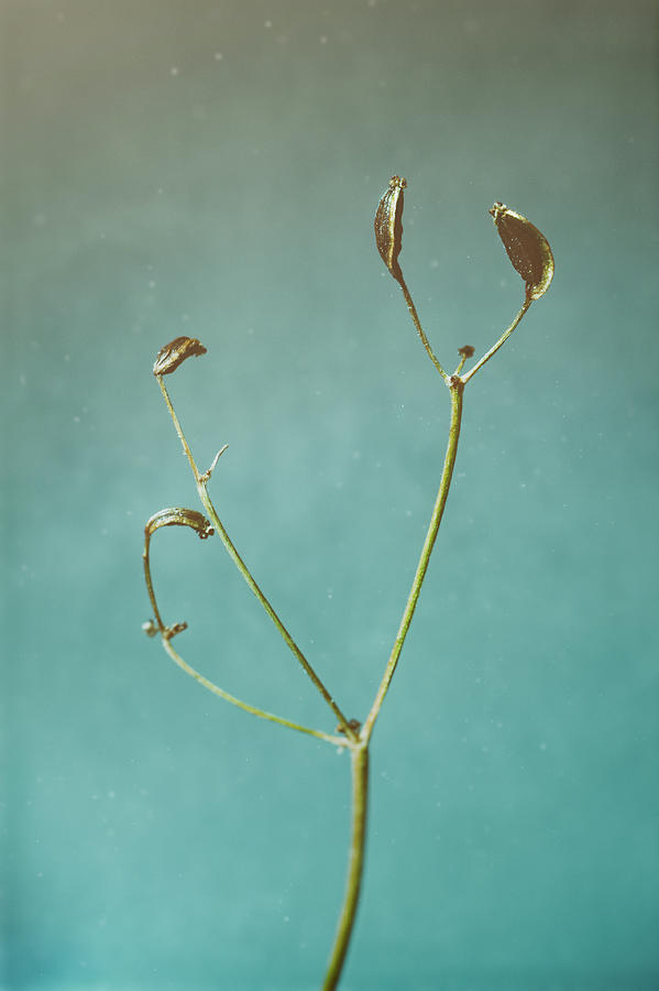Tiny Seed Pod by Scott Norris