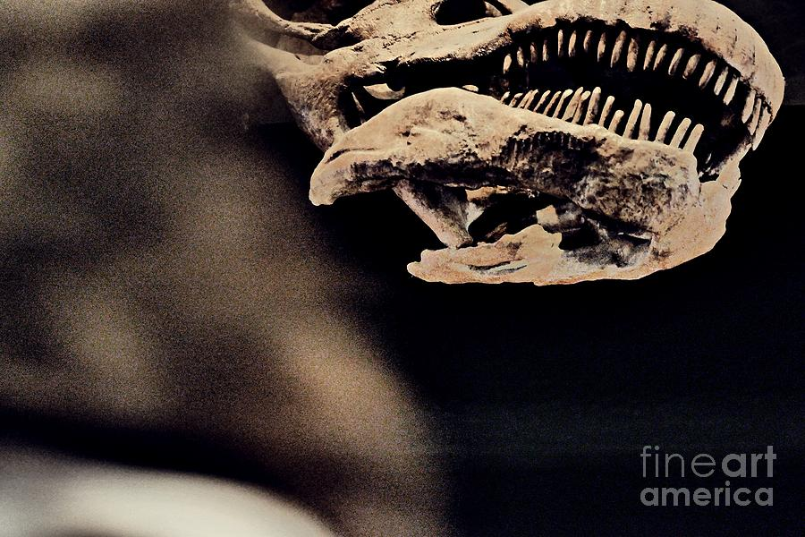 Titanosaur Photograph