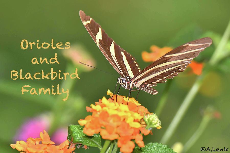 Title Slide Orioles and Blackbird Family by Alan Lenk