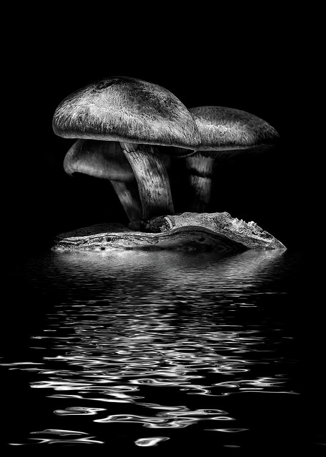 Toadstools On A Toronto Trail Reflection 3 by Brian Carson