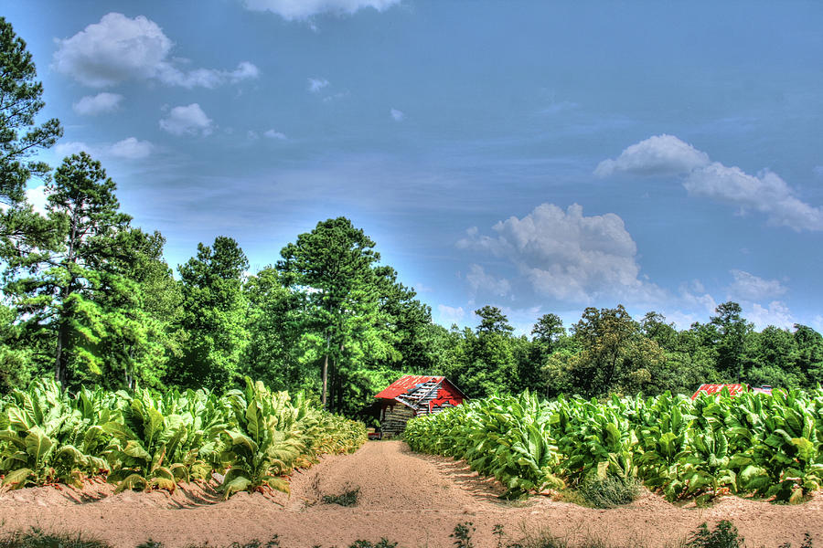 Tobaccon Barn by Brian Cole