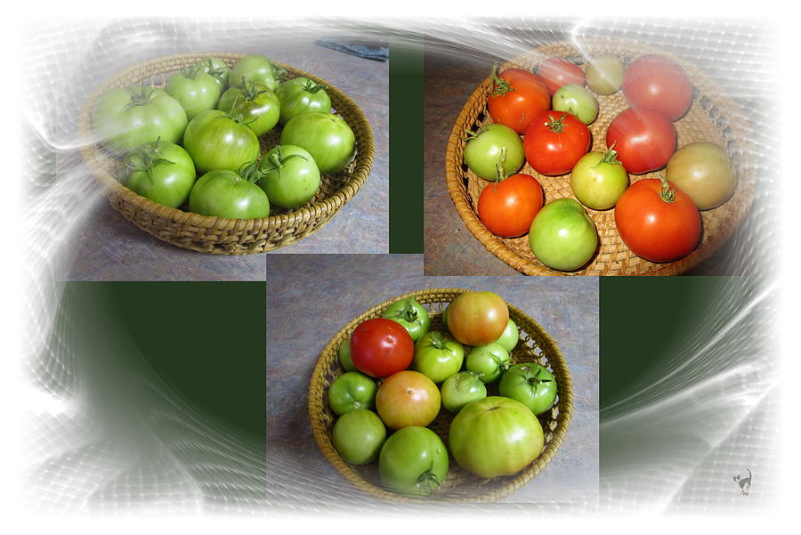 Tomatoes From The Vine To The Table by Joyce Dickens